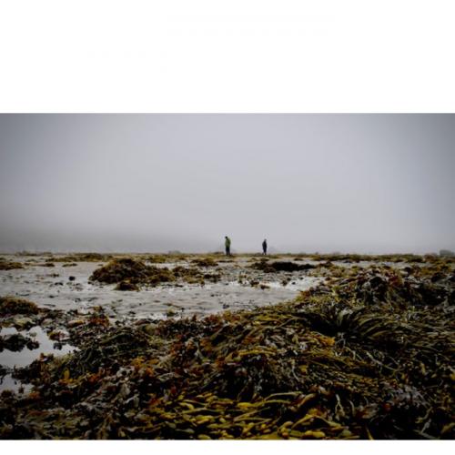 Peran Rumput Laut sebagai Penjaga Bumi dari Perubahan Iklim