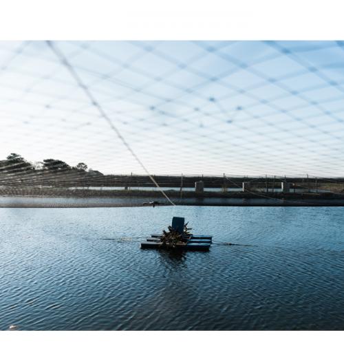 Optimisation of Feeding Strategies at A Fish Farm Through Mathematical Modelling