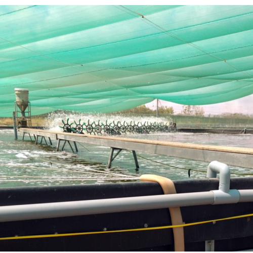 Extensive Shrimp Farming Technique Improved in Two Phases