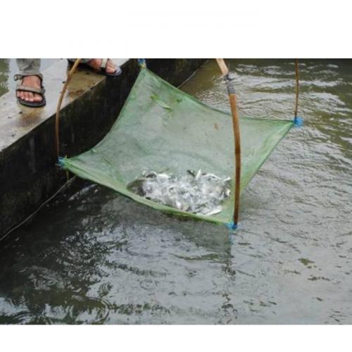 Ternyata Begini Pengangkutan Ikan yang Benar