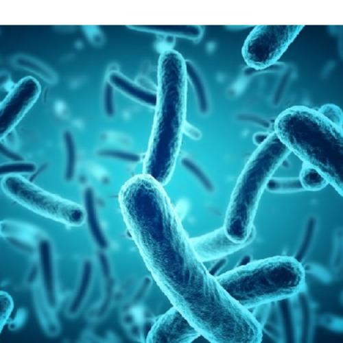 Probiotik dalam Akuakultur