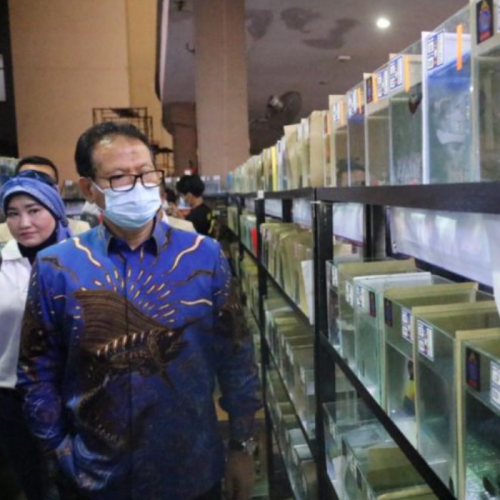 Apresiasi Komunitas Cupang, MAI Optimistis Indonesia Rajai Ekspor Ikan Hias Dunia